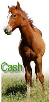 Cash Main