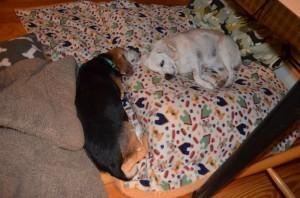 Aurora and Widget on bed