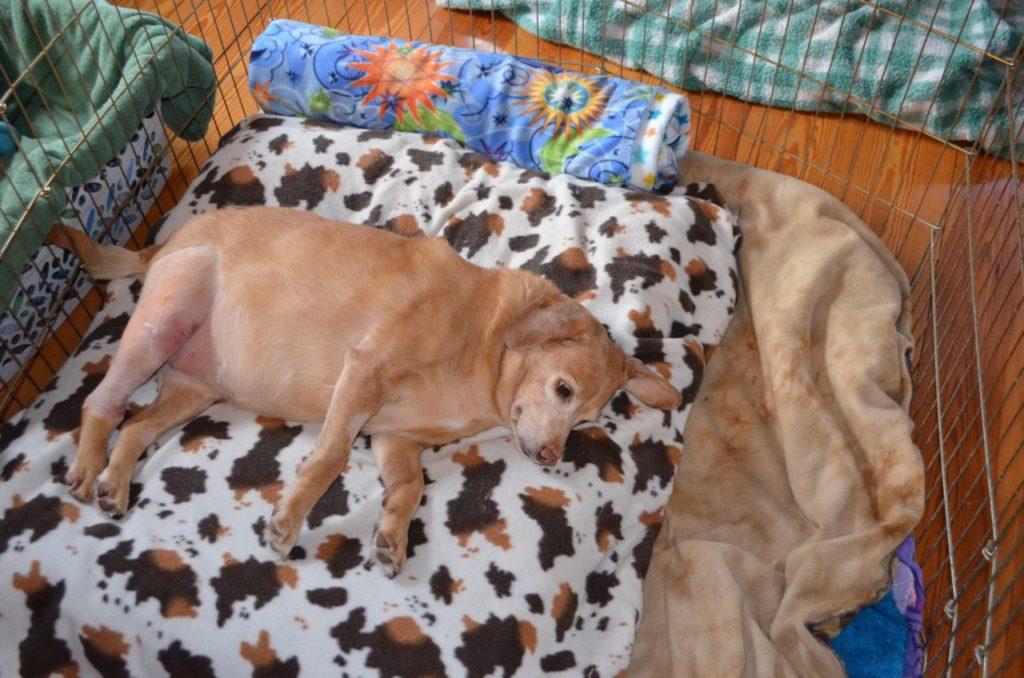 Darla on hospital bed