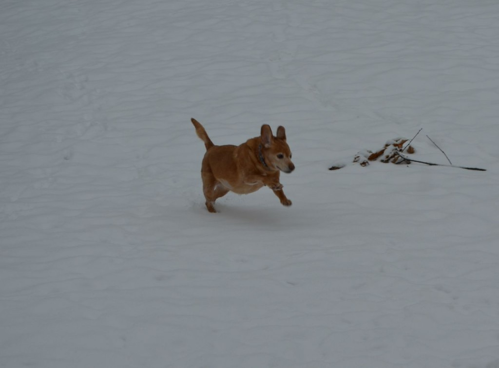 Darla in snow 5