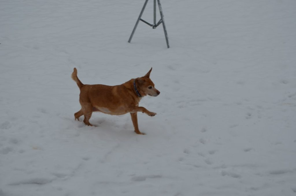 Darla in snow 6