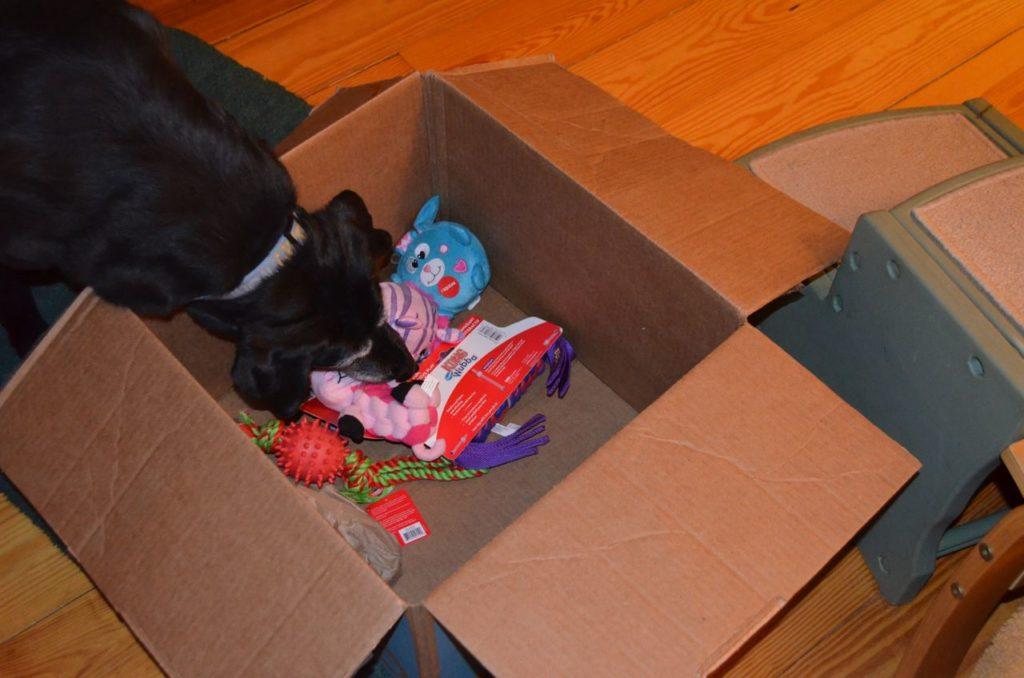 Stella with box 6