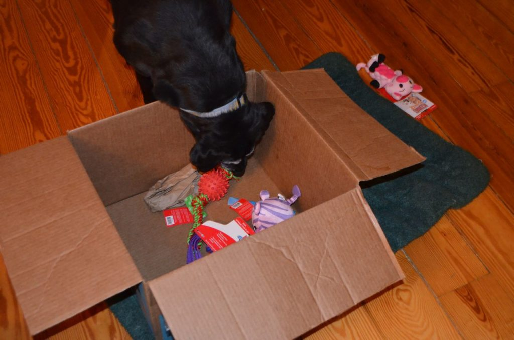 Stella with box 8