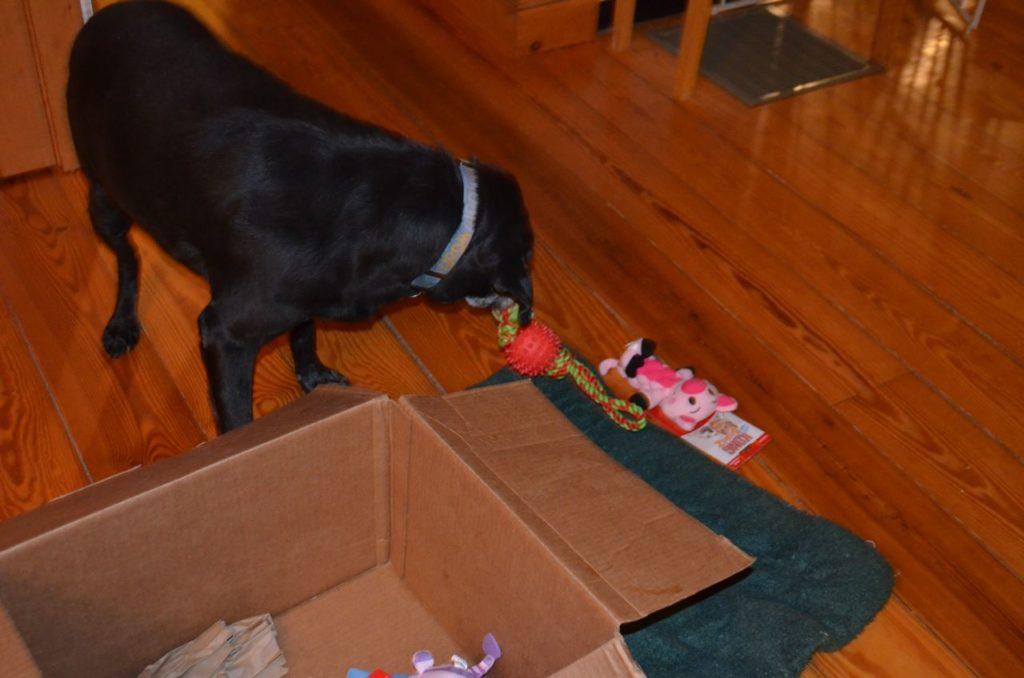 Stella with box 9