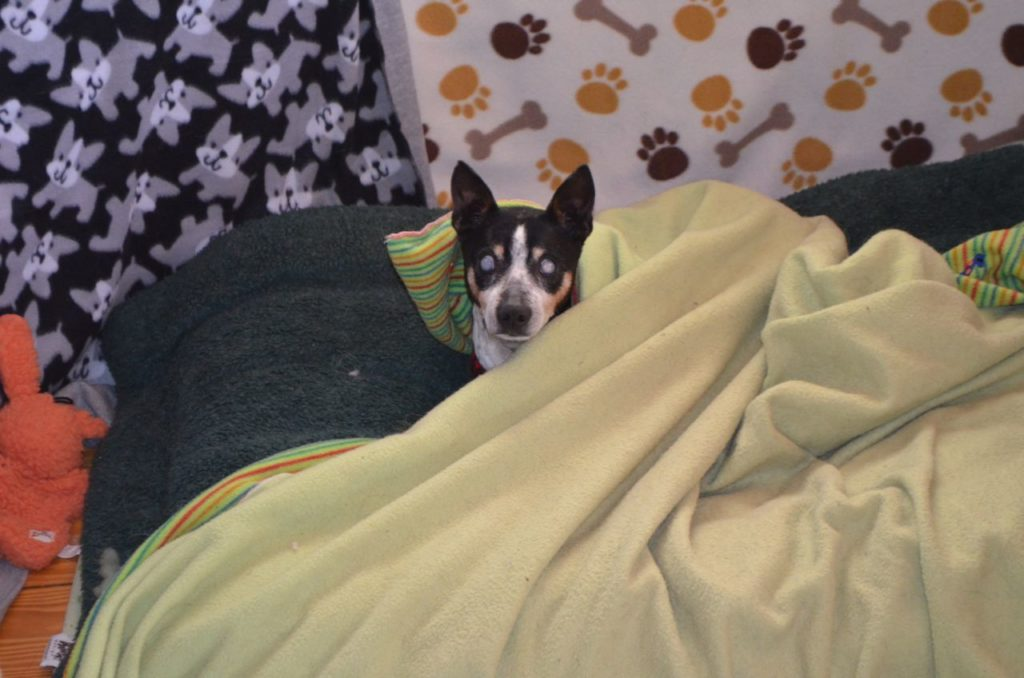Taco under blanket