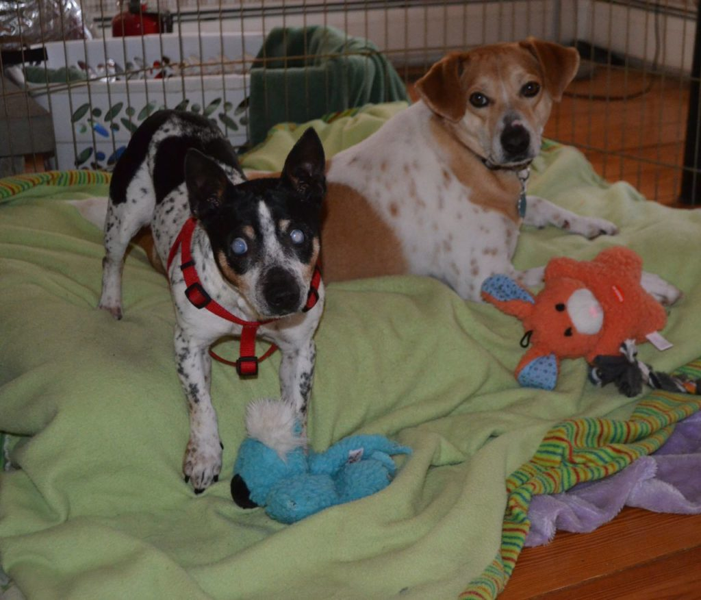 Tanner and Taco with toys 1