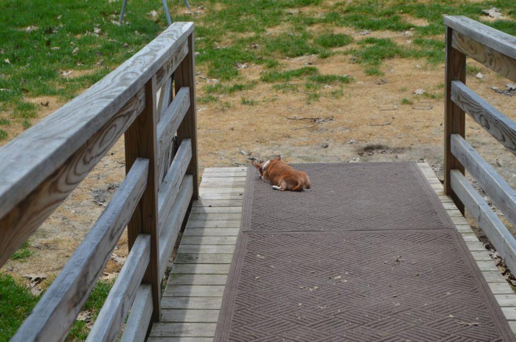 Wilbur on ramp 1