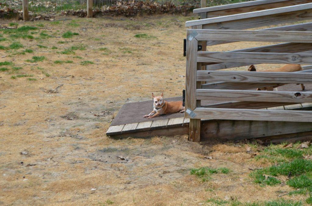 Wilbur on ramp 3