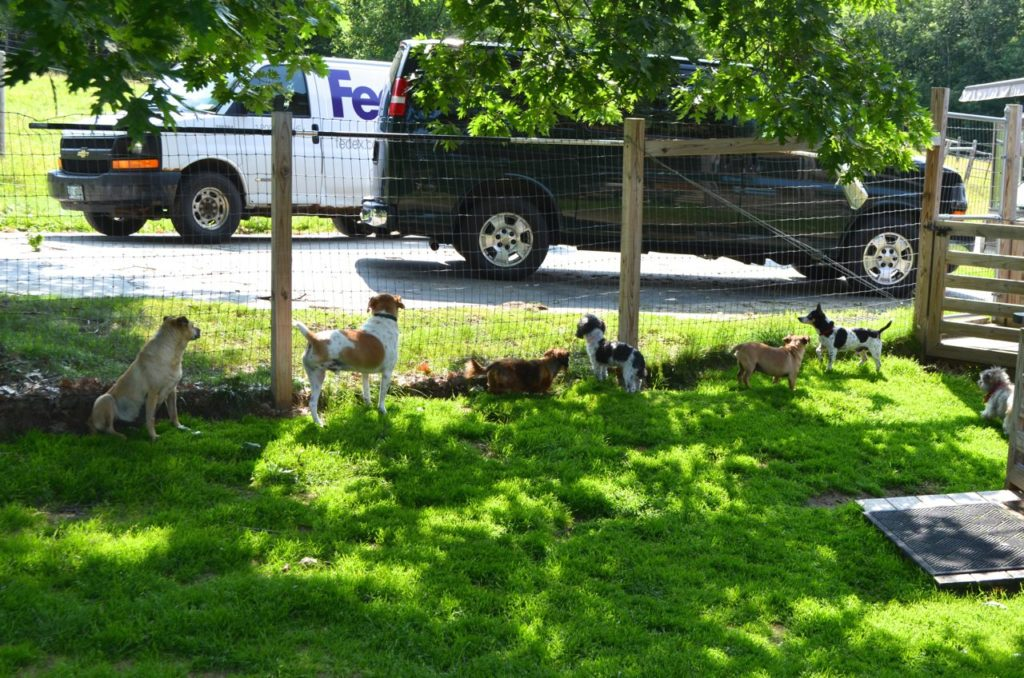 Dogs with FedEx van