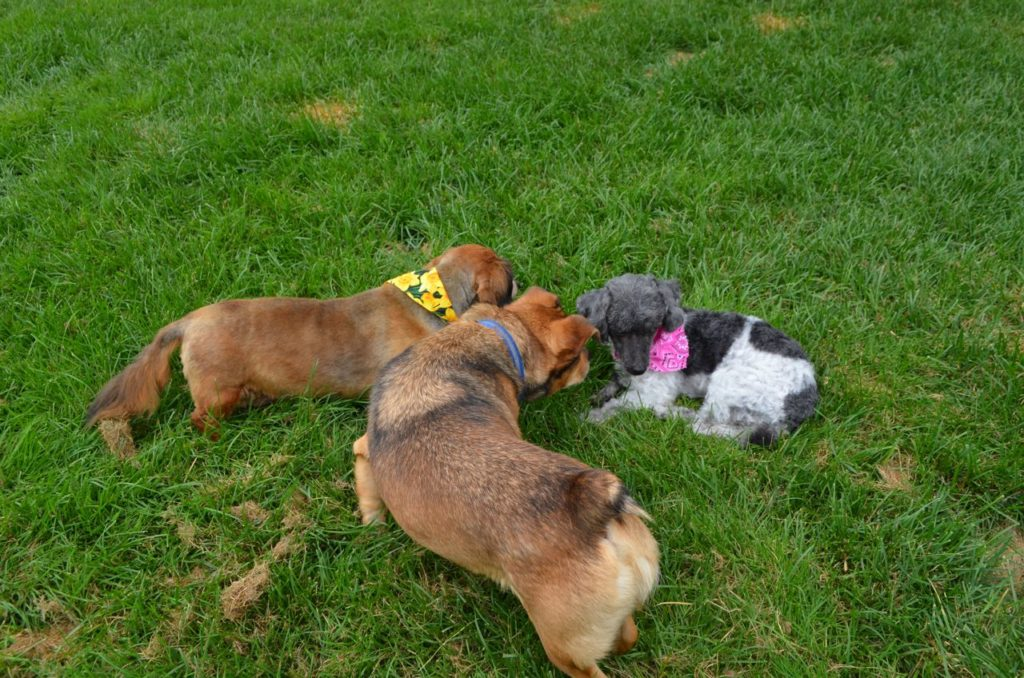 Mabel with Bugsy and Sophie