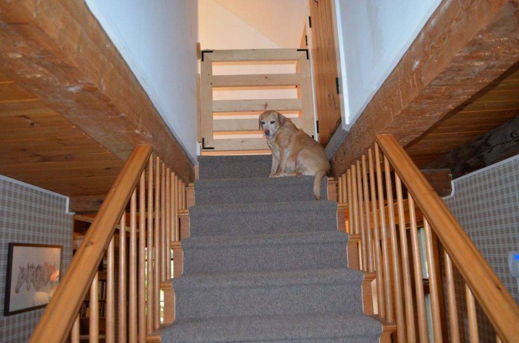 Darla at top of stairs