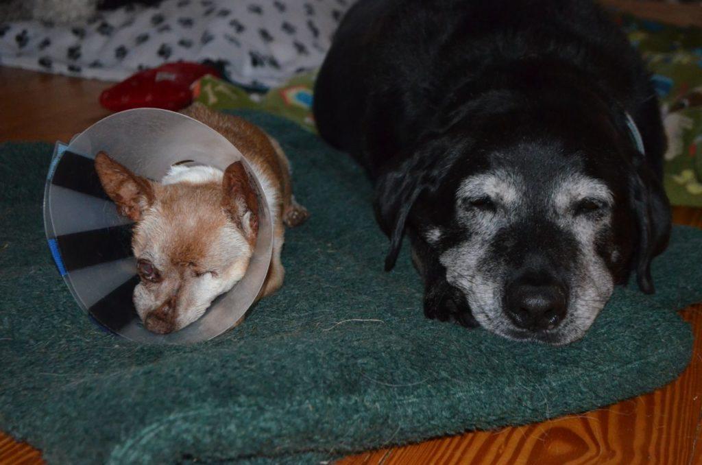 Stella and Wilbur