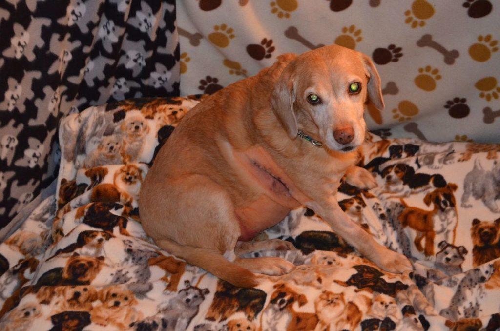 Darla after surgery Nov 6