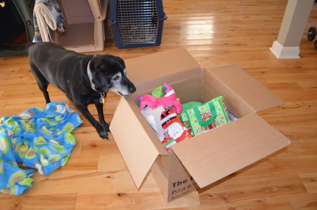 Stella with box 1
