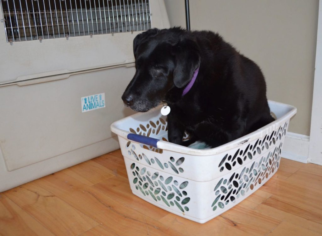 Allie in basket