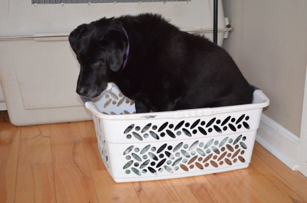 Allie in basket 2