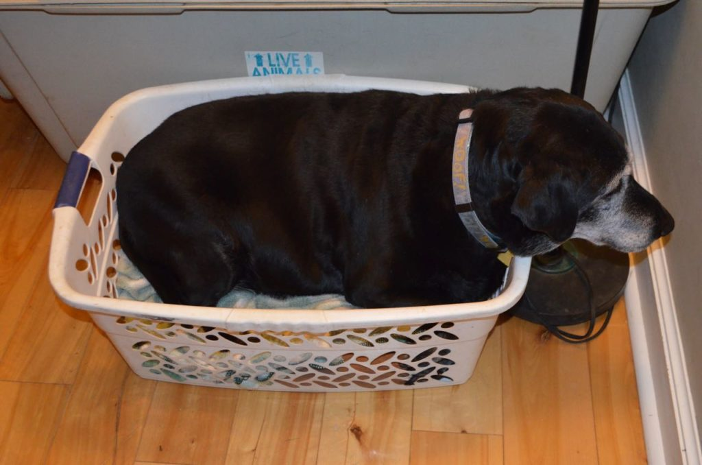 Stella in basket
