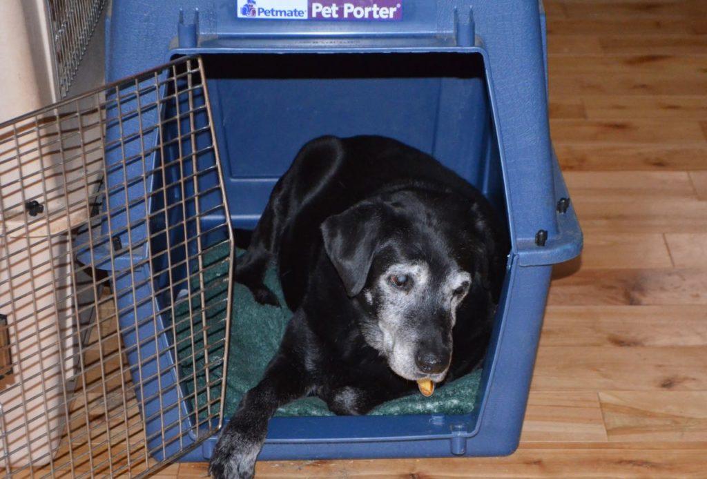 Stella in crate 3