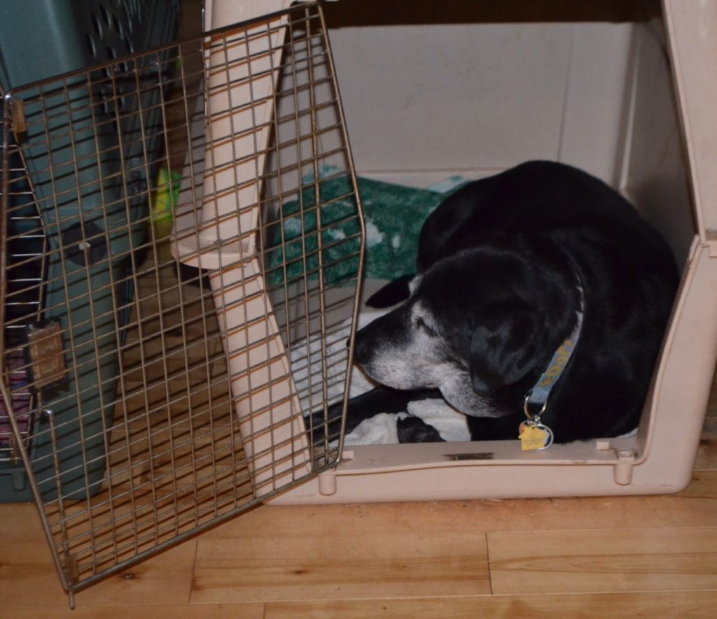 Stella in crate 4
