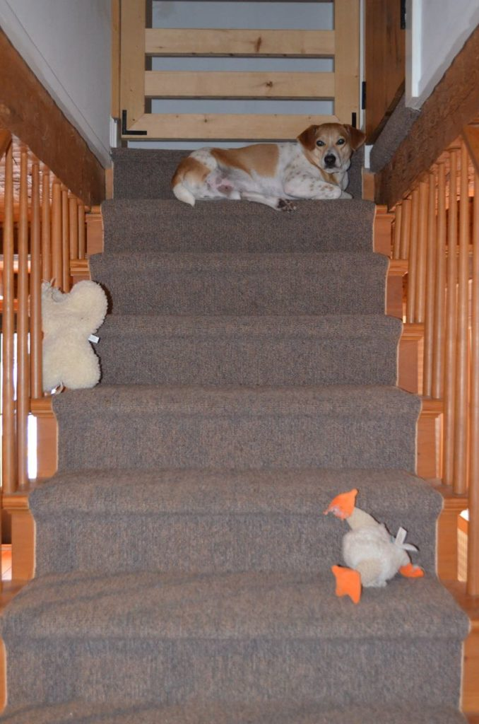 Tanner on stairs with toys