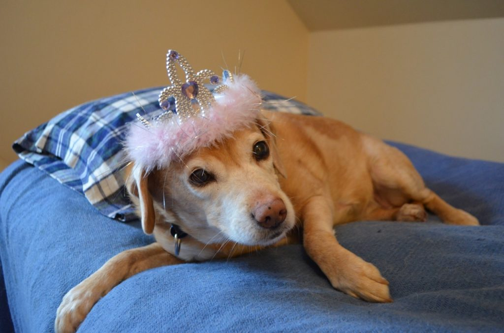 Darla with tiara