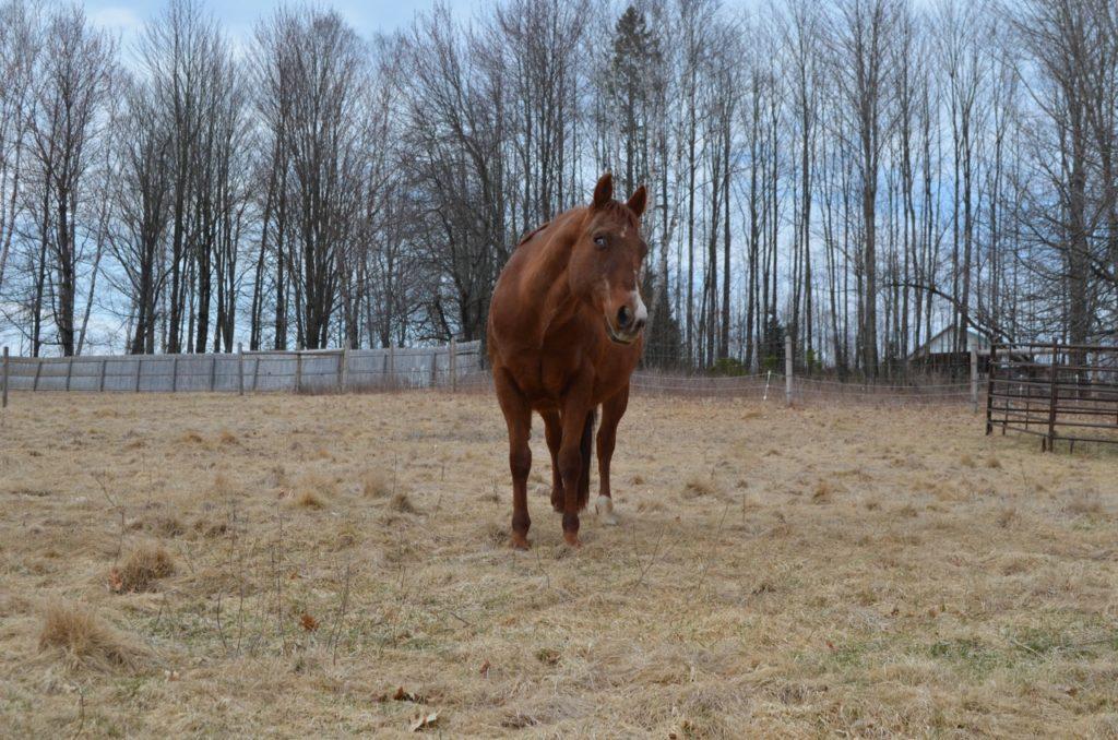 Lena on pasture April 18