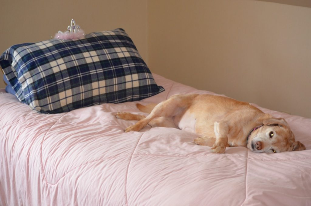 Darla on pink bed